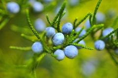 Frutti antichi e frutti insoliti